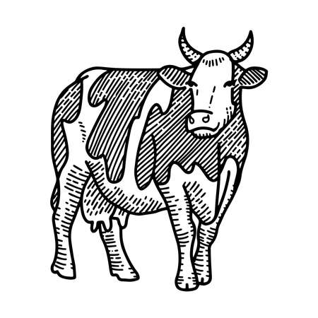 engraving illustration of hand drawn spotted cow, isolated on white background. Farm animal with horns sketch. Ilustração