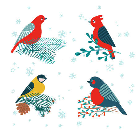 Tit bird, bullfinch sitting on fir branch, mistletoe and holly berries isolated on white background. Set of vector holiday festive christmas illustrations in cartoon flat style. 向量圖像