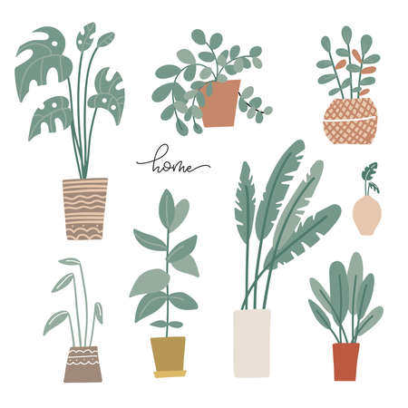Potted plants set in Scandinavian style. Palms and house plants. Hand drawn vector illustration. Set of house indoor plant 일러스트