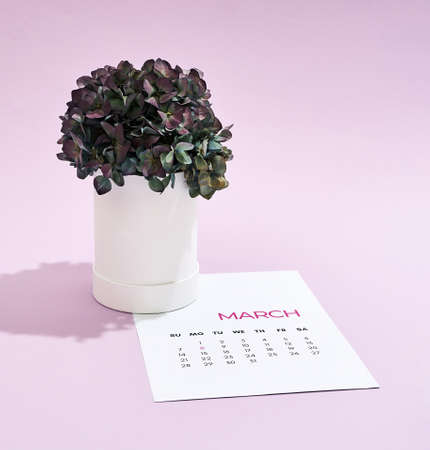 Happy Womens day. Beautiful green potted flowers standing on the calendar for March over purple background
