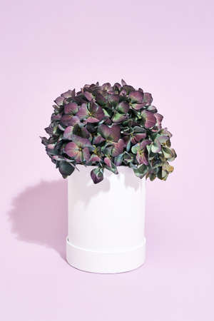 Gift for Mothers day. Beautiful potted flowers standing on purple background 免版税图像