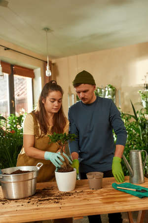 Young caucasian spouses transplanting plant into new pot