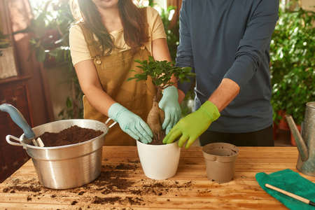 Hands of young people in gloves transplanting plant