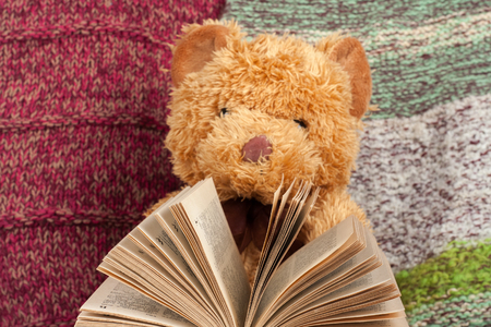 bible flower: Back to school. Knitted blanket. Teddy bear reading a Open hardback book. Copy space for text.