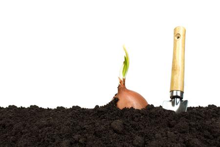 Grüner Sprössling, der aus dem Boden herauswächst, der auf weißem Hintergrund lokalisiert wird. Gartengeräte auf fruchtbarem Boden Textur Hintergrund. Garten- oder Pflanzkonzept. Arbeiten im Frühlingsgarten. Standard-Bild