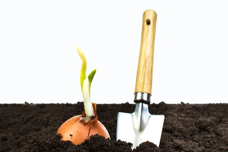 Green sprout growing out from soil isolated on white background. Gardening tools on fertile soil texture background. Gardening or planting concept. Working in the spring garden.