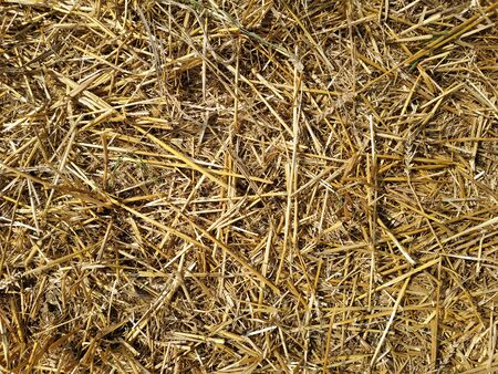 dry yellow straw scattered on the ground.