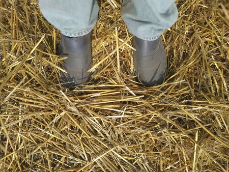 straw scattered on the ground under the sole of a boot. legs in jeans and boots. Imagens