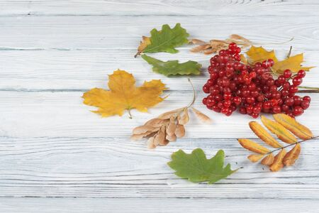 Colorful autumn leaves, berries on wooden background, Copy space for text. Top view.