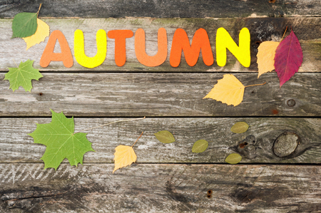 card making: Handmade autumn background on old wooden boards. Word Autumn made of felt. Autumn leaves. Top view