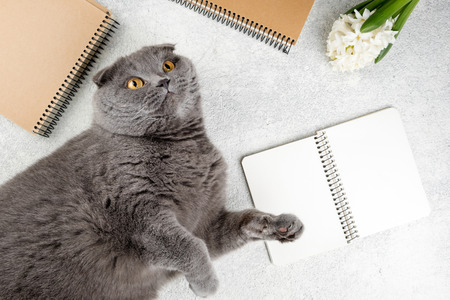 Cute cat lying on white wooden table with notebooks and flower hyacinth. Cozy weekend concept, top view