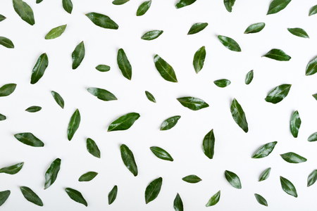 Set of pistachio green leaves on white background. Green leaves pattern. Top view