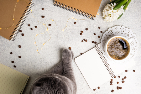 Flat lay feminine background with cat, coffee cup, notebooks and flower hyacinth. Femininity still life. Cozy weekend at home concept. Top view Archivio Fotografico - 115147362