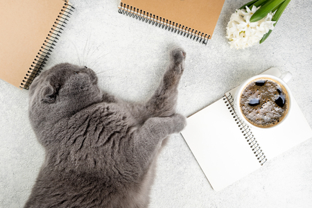 Cute cat lying on white wooden table with coffee cup, notebooks and flower hyacinth. Femininity background. Cozy weekend concept, top view