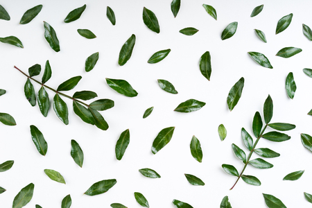 Set of pistachio green leaves and branch on white background. Green leaves pattern. Top view