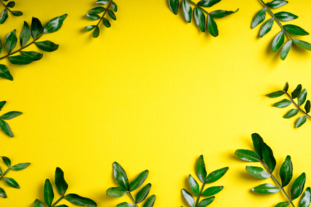 Compositions of pistachio green leaves on yellow background. Green leaves pattern. Top view, flat lay Zdjęcie Seryjne