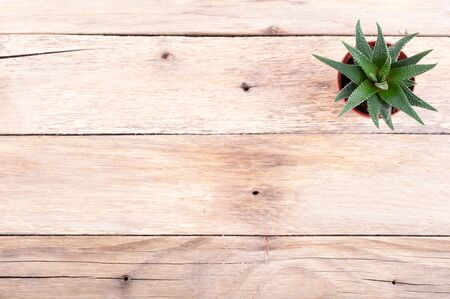 Succulent. Aloe vera on old rustic background with copy space. Top view
