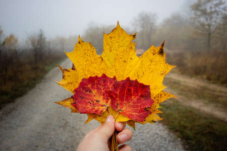 Autumn leaves in hand. Female hand holding leaf in autumn landscape with fog. Autumn, weather, mood, travel concept Foto de archivo