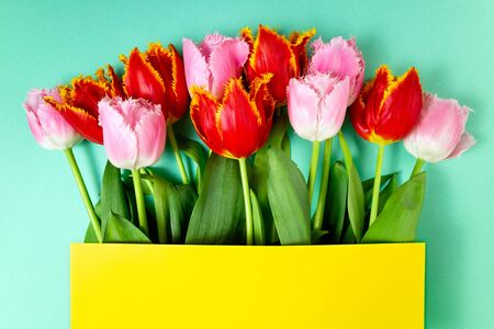 Bouquet of tulips flowers on color festive background. Spring flowers on floral card. Greeting card, holidays concept. Top view, copy space