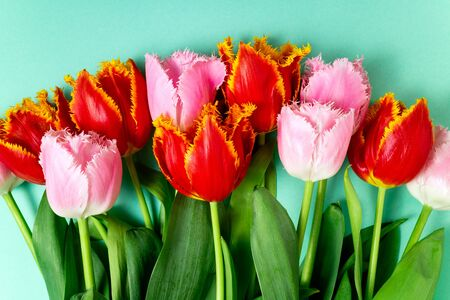 Spring flowers. Bouquet of tulips flowers on color background. Holidays, Easter, 8 march, happy birthday, anniversary, wedding, congratulations card concept. Flat lay Zdjęcie Seryjne