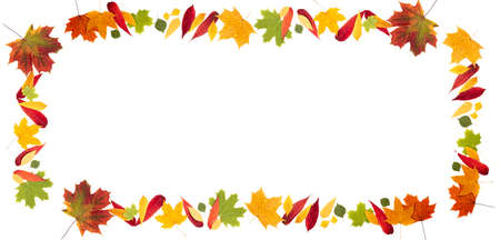 Autumn frame made of autumn leaves on white background. Autumn composition. Leaves falling. Autumn background long format with copy space, top view