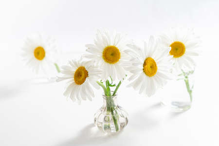 Beautiful chamomiles flowers in glass vases on white background. Floral composition in home interior. Spring and summer festive card with daisy flowers Banque d'images