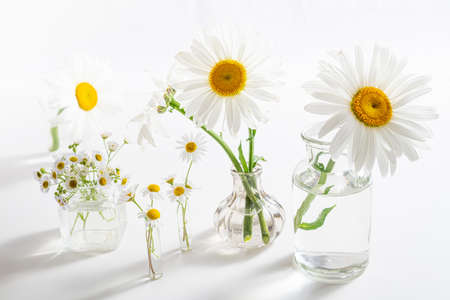 Beautiful chamomiles flowers in glass vases on white table. Floral composition in home interior. Spring and summer festive background with daisy flowers
