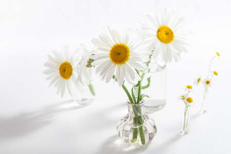 Beautiful chamomiles flowers in glass vases on white background. Floral composition in home interior. Spring and summer daisy flowers