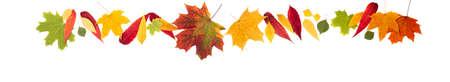 Autumn composition. Autumn leaves on white background. Autumn background. Long web format Banque d'images