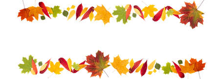Autumn composition. Frame made of autumn leaves on white background. Autumn background. Long format with copy space Foto de archivo