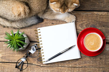 White blank notebook, coffee cup, plant, eyeglasses, cute cat on desk of home office flat lay. Freelance, blogging, cozy home with cat concept. Top view with copy space, flat lay Foto de archivo