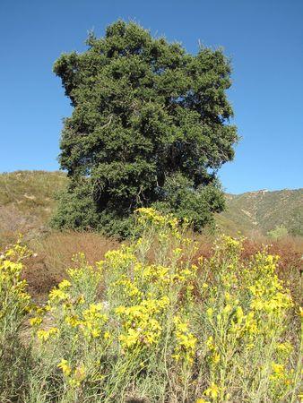 wildwood: Wildwood Canyon Park, Yucaipa, CA