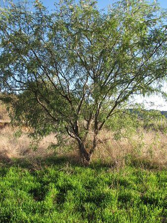 wildwood: Tree and grass in Wildwood Canyon Park, Yucaipa, CA Stock Photo