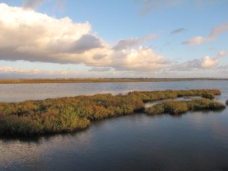 chica: Wetlands, Bolsa Chica Ecological Reserve, Huntington Beach, CA