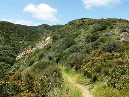 zuma: Ocean View Trail, Zuma Canyon, Malibu, CA
