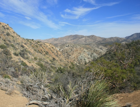 Mountains and trees in the desert, Santa Rosa Wilderness, CA