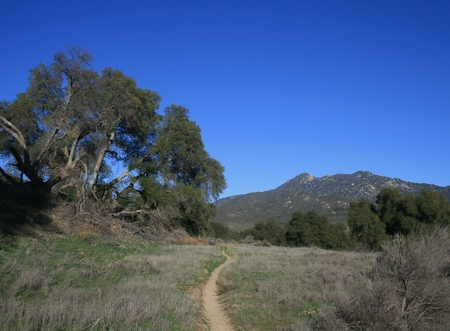 pacific crest trail: Pacific Crest Trail leading through a meadow past a live oak, San Diego County, California