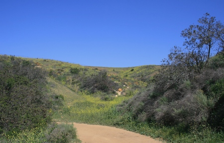 orange county: Dirt road through hills with spring wildflowers, Orange County, CA