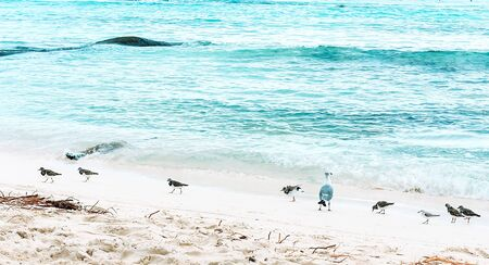 View of one adult and several baby seagulls walking on the beach along clear water background. Summer time vacation concept.