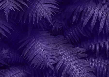 Ultra Violet dark and moody backdrop for your design. Top view. Top view. Copy space. 免版税图像