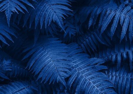 Perfect natural young fern leaves pattern background. Blue dark and moody backdrop for your design. Top view. Copy space.