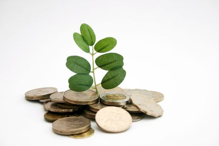 three leafed: Money tree by leaf and coin