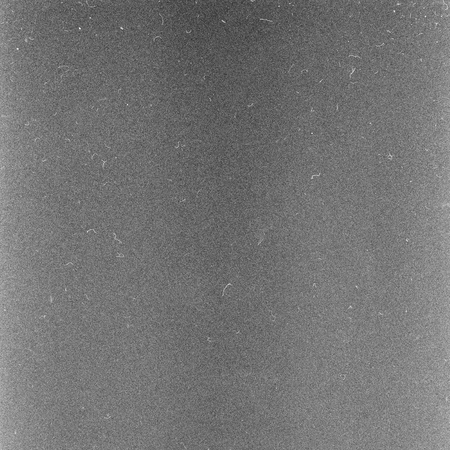 negative film: Scan of negative film