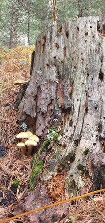 Silvetre mushroom in full nature in the sunlight