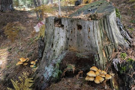 Set of mushrooms next to felled tree trunk in the middle of the forest.