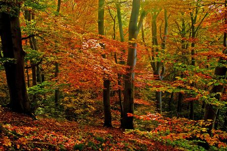 Clearing in the autumn Stock Photo