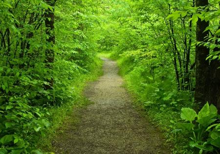 ecosistema: Paseos camino en el bosque de verano Foto de archivo