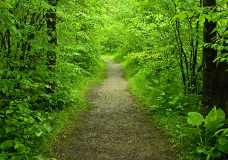 Walking path in the summer forest