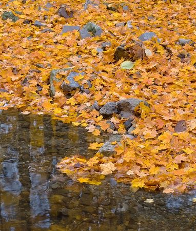 blanketed: Autumn forest with small brook and orange maple leaves on the ground