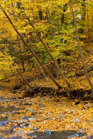 Small brook in the autumn forest with yellow leaves and rocks